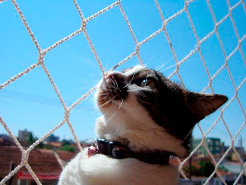 Por que você precisa de Redes de segurança para seu gato?