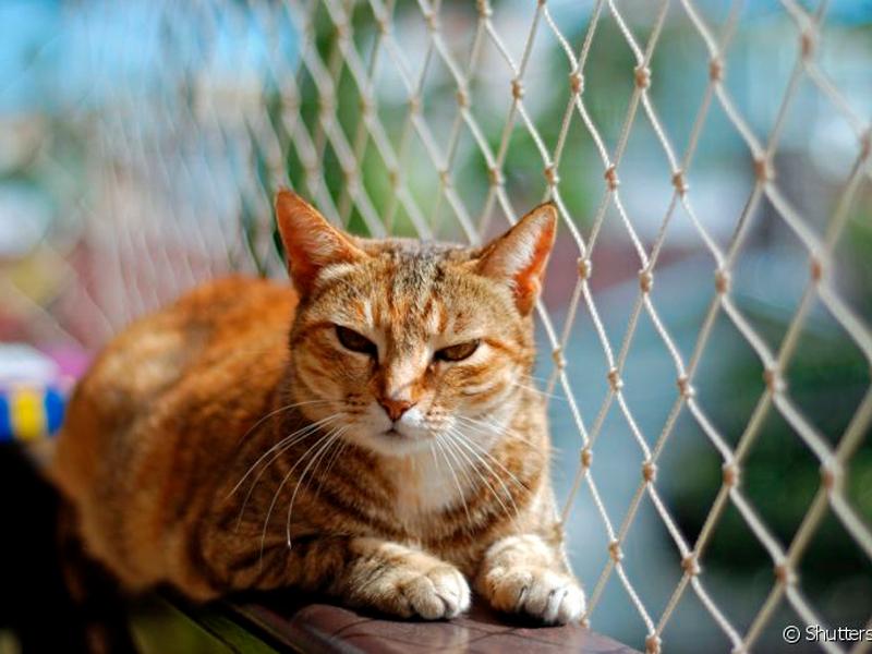 Redes de Proteção para gatos: A segurança do seu bichinho de estimação